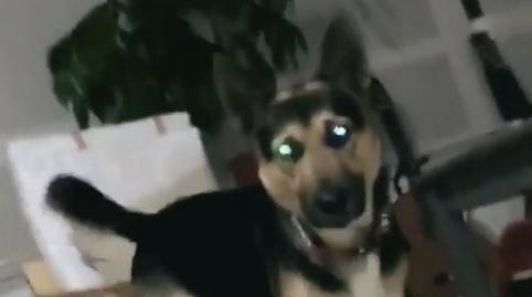 Mi perro juega mejor que yo al billar #OhMyPet