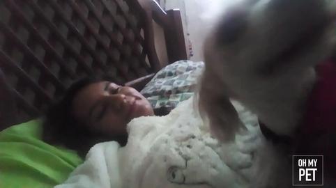 Mi  despertador cada mañana #OhMyPet