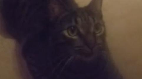 Nico el catdog #OhMyPet
