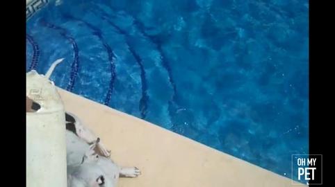 Having fun in the pool #OhMyPet